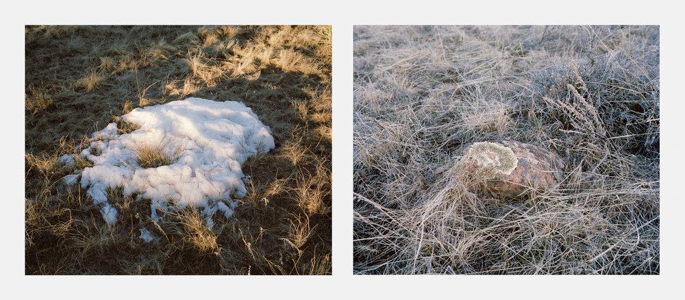 Snow / Moss