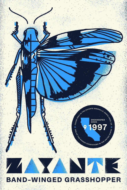 Type Hike Alphabeast_Zayante Band-Winged Grasshopper.jpg