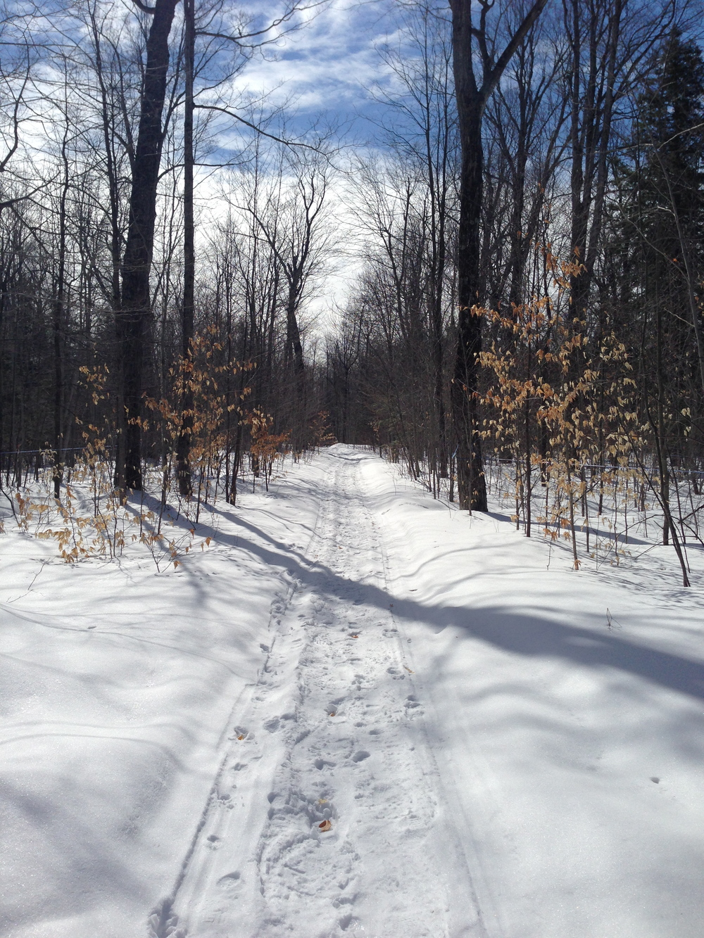 sugar bush lane.jpg
