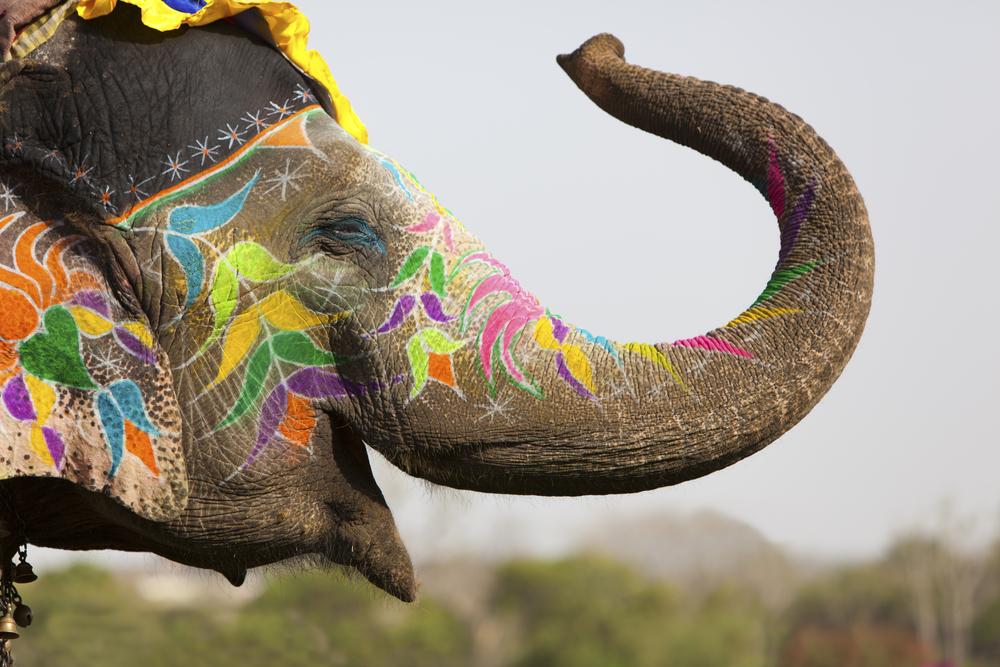 elephant updates