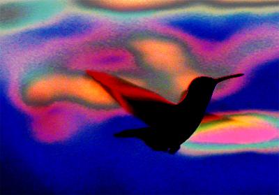 Neon Hummingbird