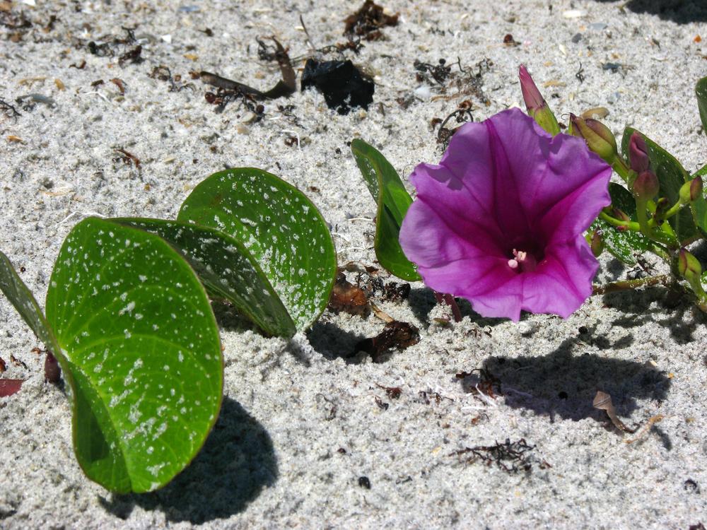 Beach Bloom.jpg