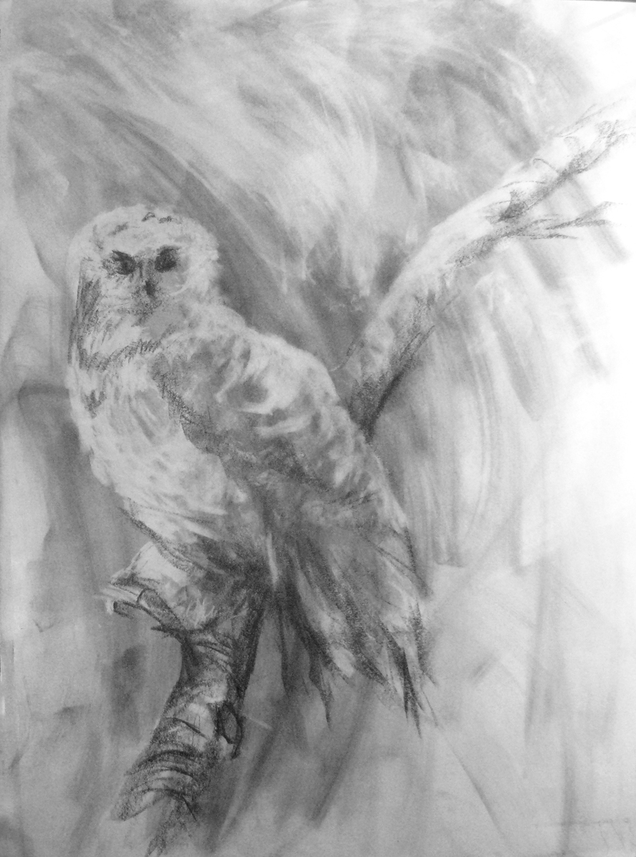 Bates Owl