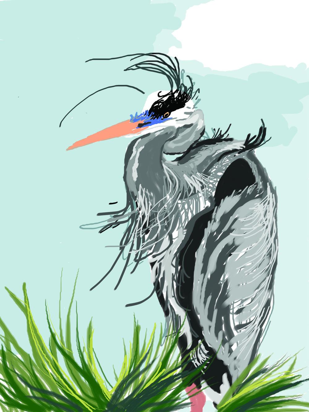 Heron Sketch -color