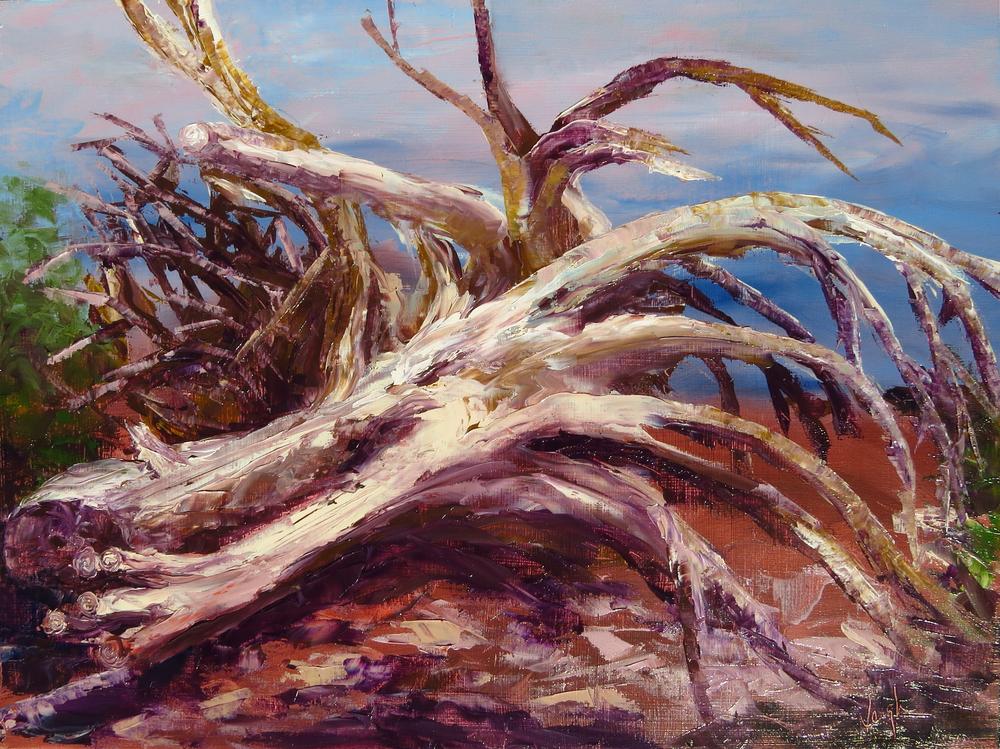 """""""Dead Wood"""" 12x16 oil on panel"""