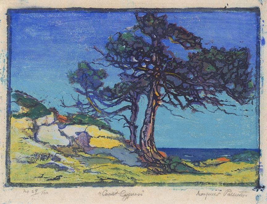 Coast Cypress