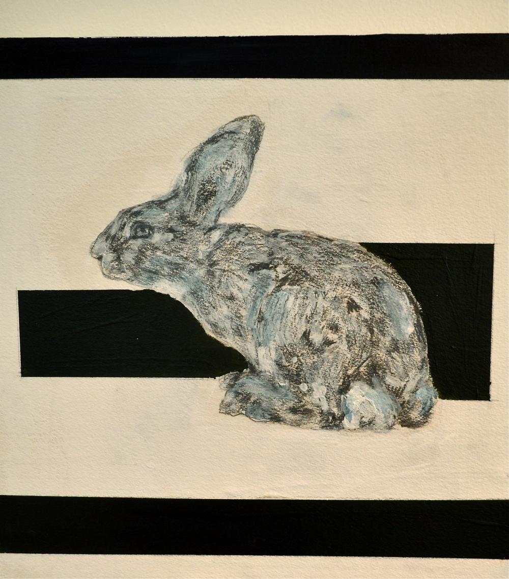 """Rabbit Series #1"""