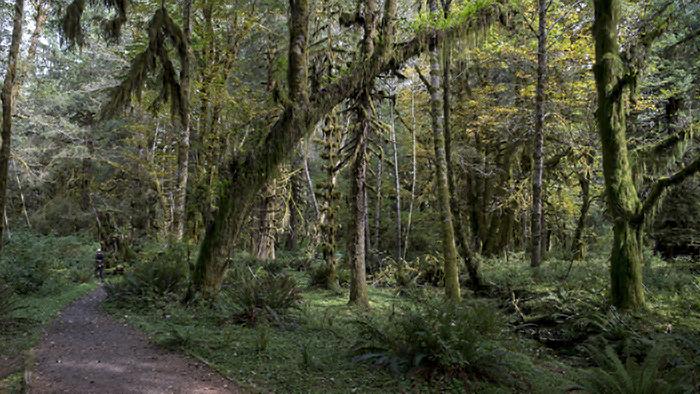 Forest-walk-path_M.jpg