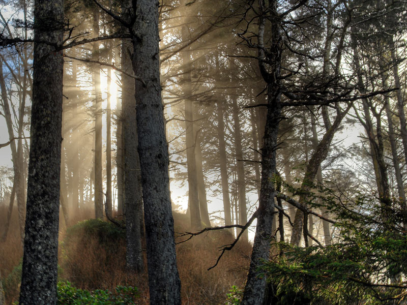 Lake-Crescent-Forest-2.jpg