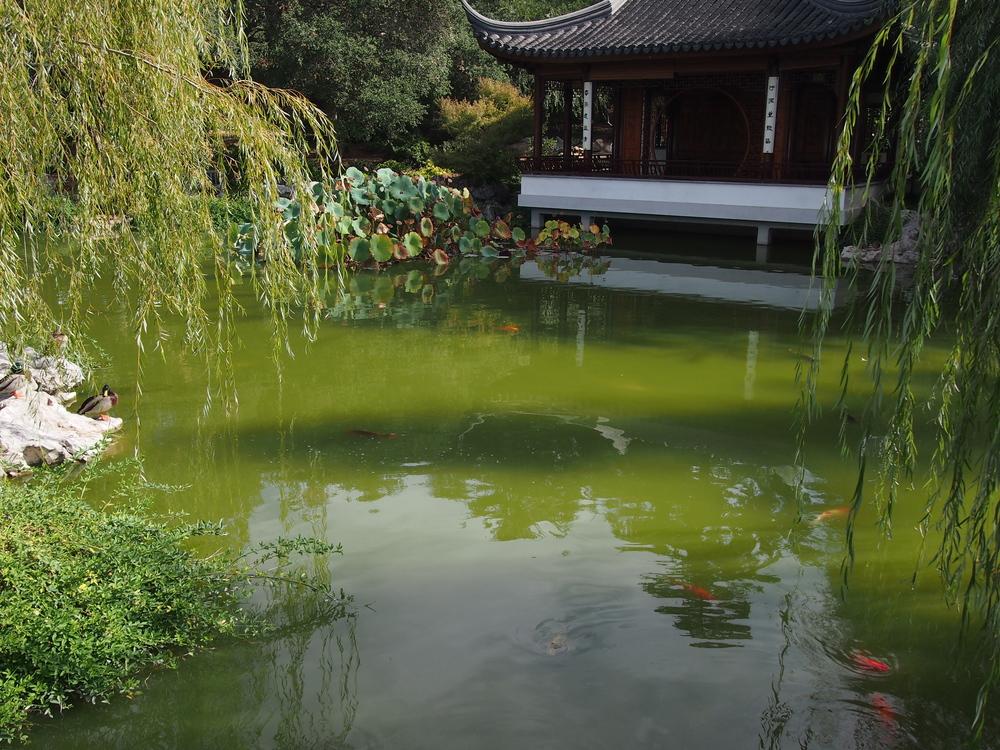Chinese Garden31.JPG