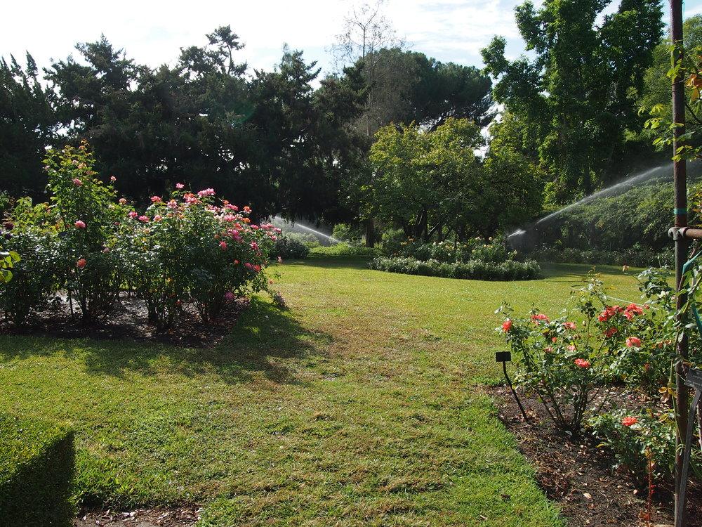 Rose Garden09.JPG