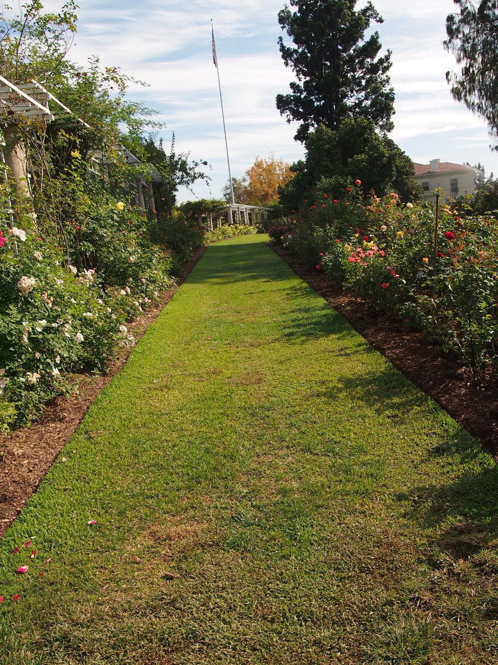 Rose Garden103.JPG