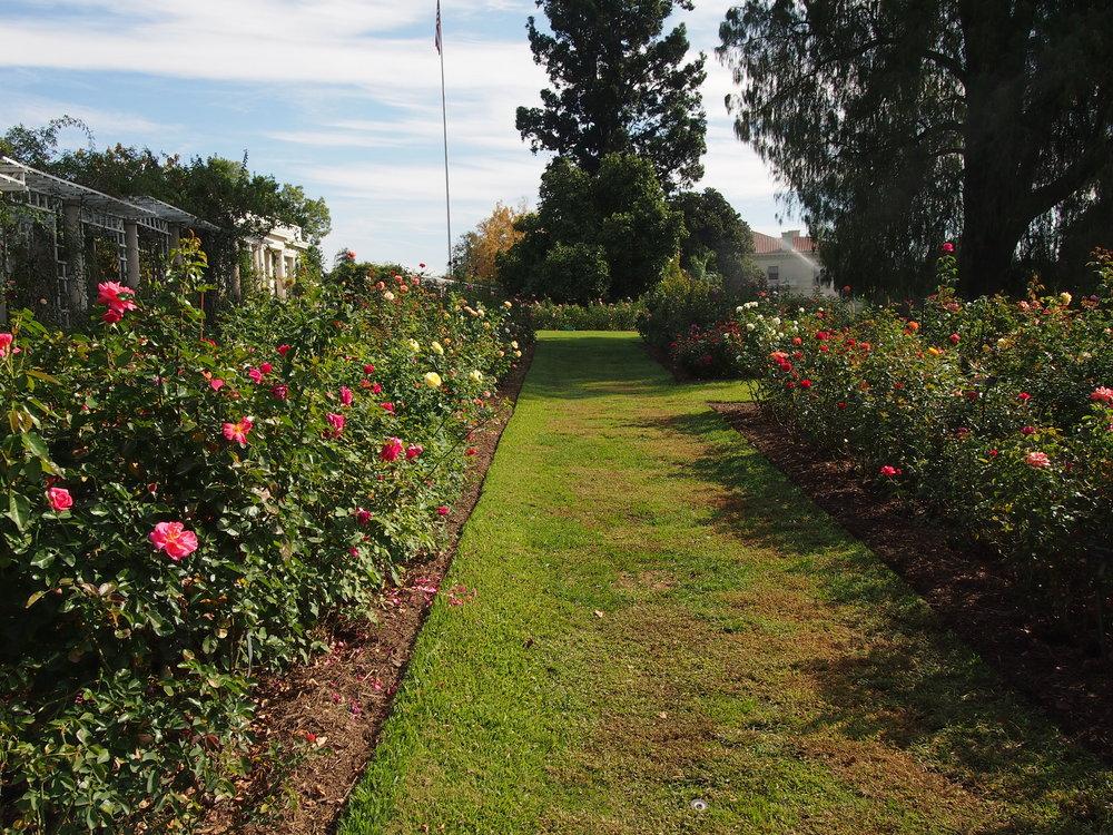 Rose Garden104.JPG
