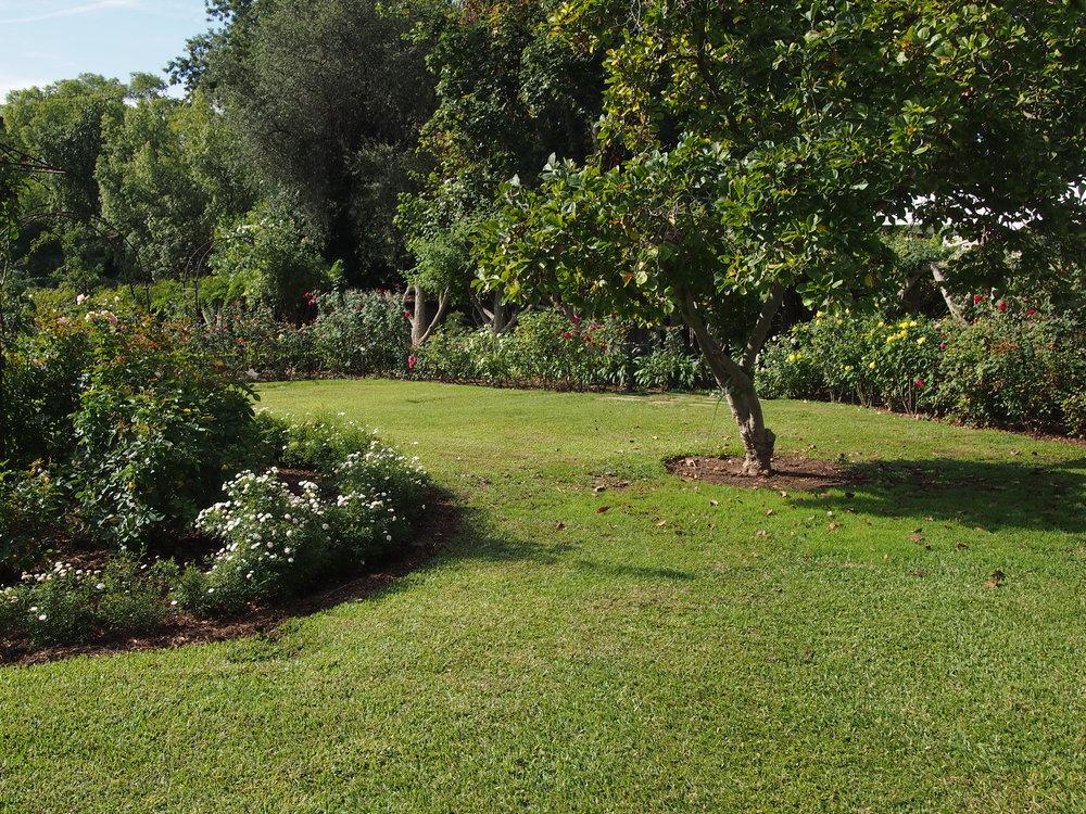 Rose Garden106.JPG