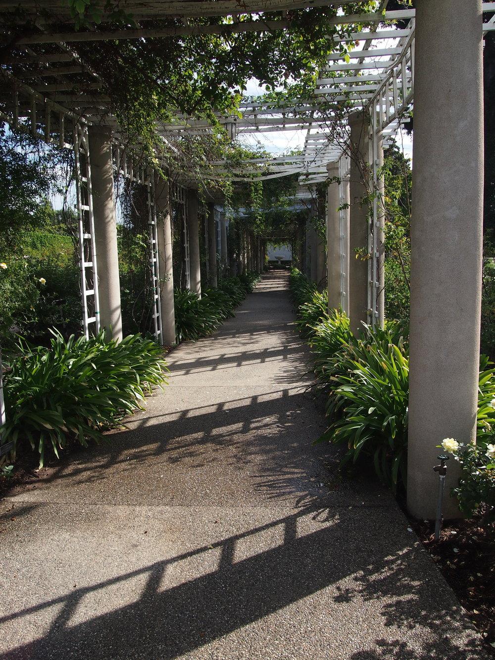Rose Garden107.JPG