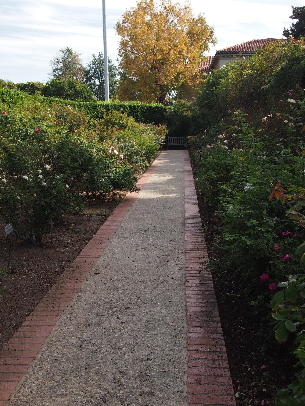Rose Garden108.JPG