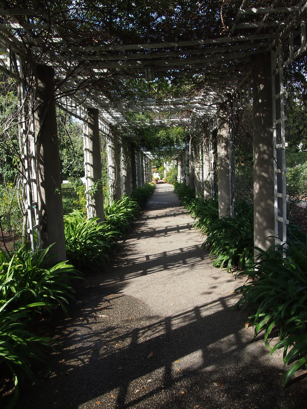 Rose Garden110.JPG