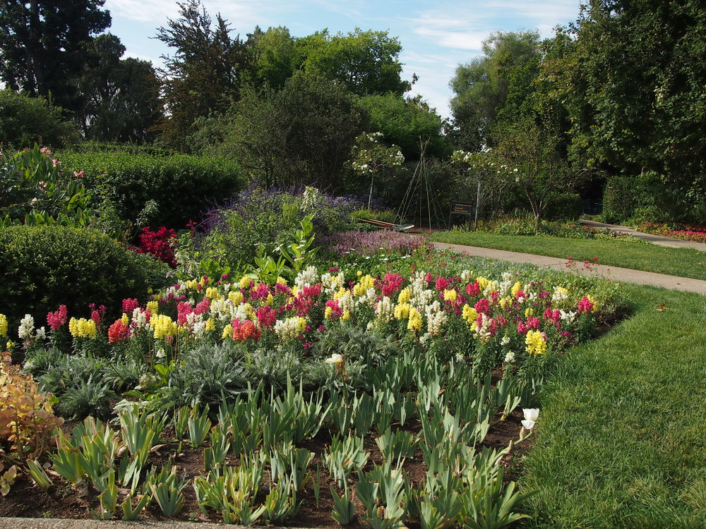 Shakespeare Garden14.JPG