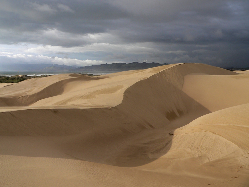 Oceano-Dunes-State-Vehicular-Park.jpeg