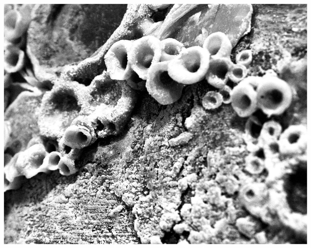 Photograph_MicroEcosystem_05.jpg