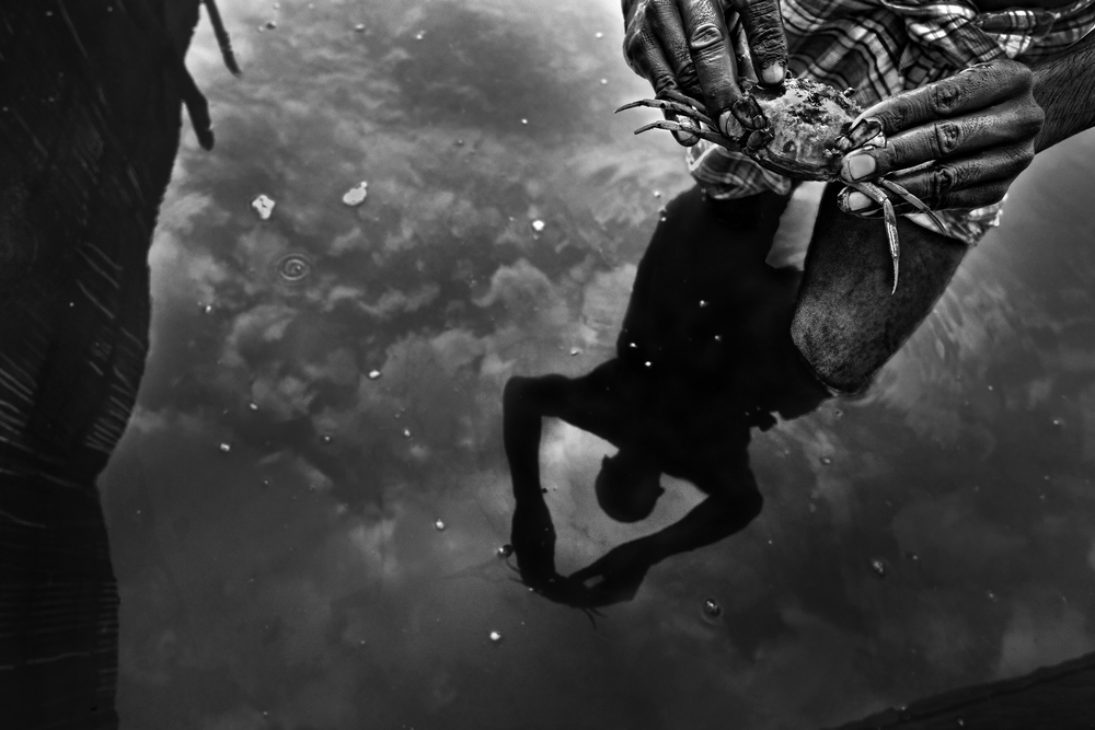 Since the saline water entered to the main land and people had no choice but star shrimp and crab farming. An early morning Mustafa(35) an inhabitant of Shamnagar working in a crab farm. Which is slowly abolishing  all the frailty of the land.