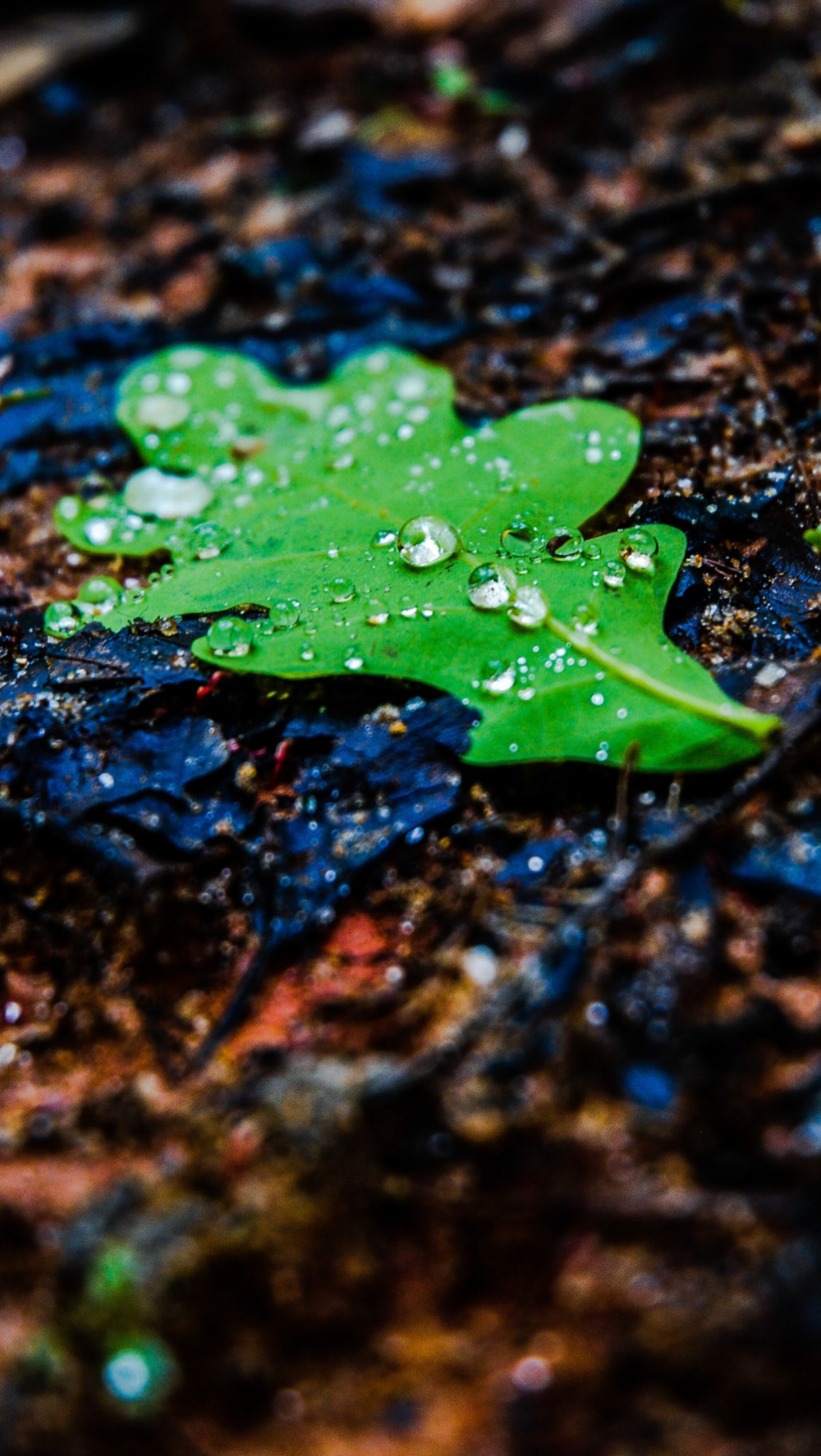 Wet Green Leaf. Free Wallpaper