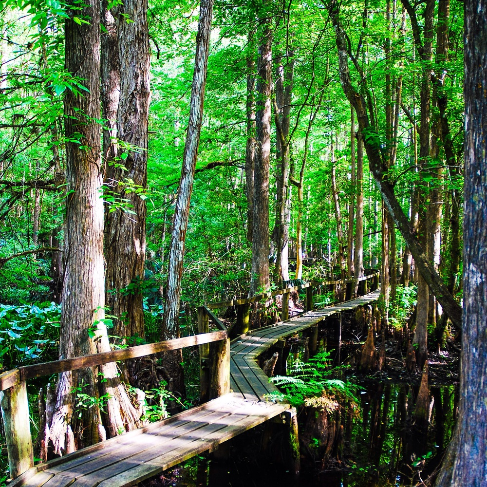 Just one of the many beautiful boardwalks in the park