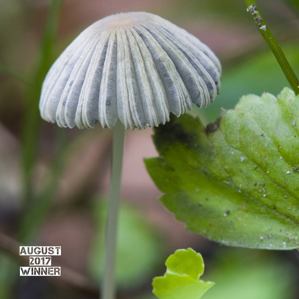 Congrats to Lara Darling  (Ldarling43)  for winning the August G.O. Newsletter Photo Contest! this is an amazing shot! i really love the detail and the composition of this shot. The bright green background really makes the mushroom pop and gives the whole image great depth. Fantastic capture Lara!