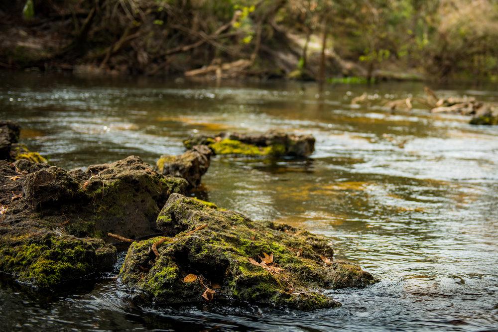 snakerock (1 of 1).jpg