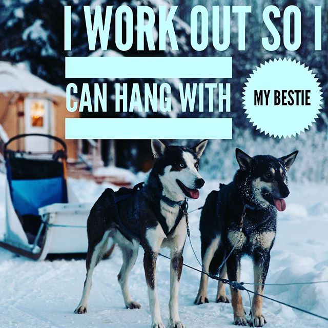 Working out doesn't have to be all about dropping L-Bs. It can be about #friendship. Tag your #workout buddy!! //photo credit to @deathtostock #friendship #fridayfeeling #feministfriday #shinetheory #fitness #fitnessmotivation #intrinsicmotivation #yoga #bodypositive #bodylove #selflove #selfcare #dogs #sledding #sleddog #dog #dogstgram #husky #huskiesofinstagram #huskies #snow #holidays #holidaydogs #strongwomen