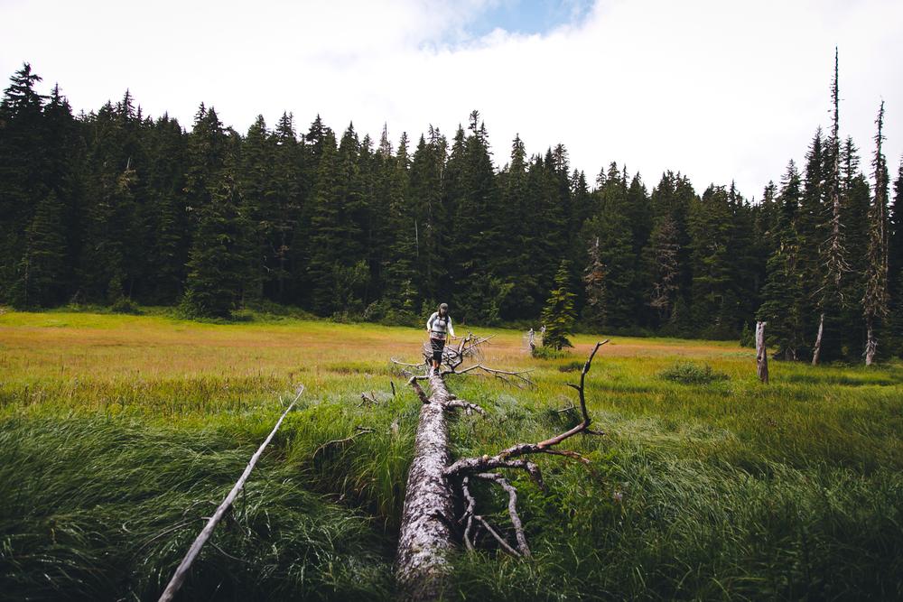 Beljica Meadow
