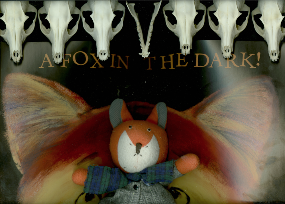 A Fox in the Dark!