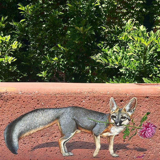 Redwood City is alright, I guess. 🦊 #spotted #foxy #fantasticmrfox #streetart #foxart