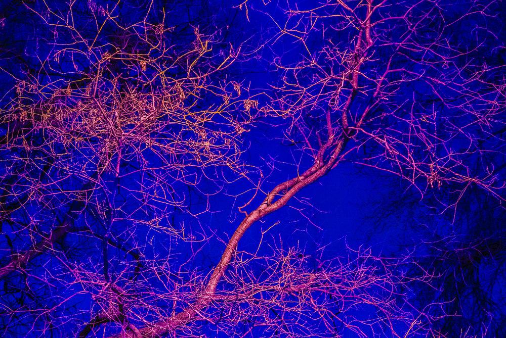 Trees 2_2.JPG
