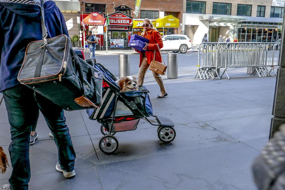 Puppy Stroller.JPG