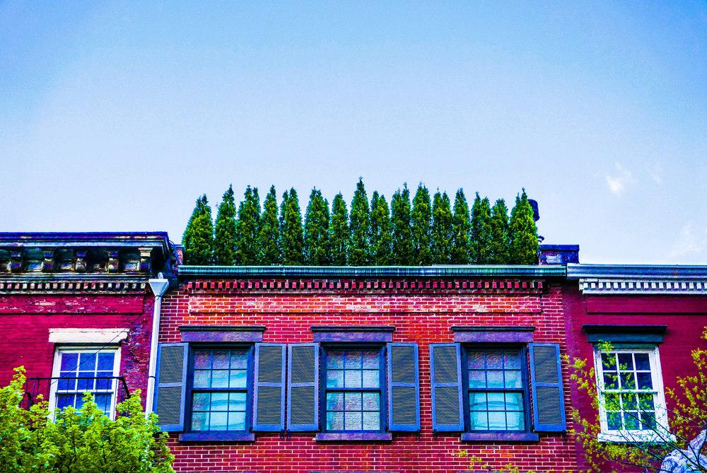 Roof Garden.JPG