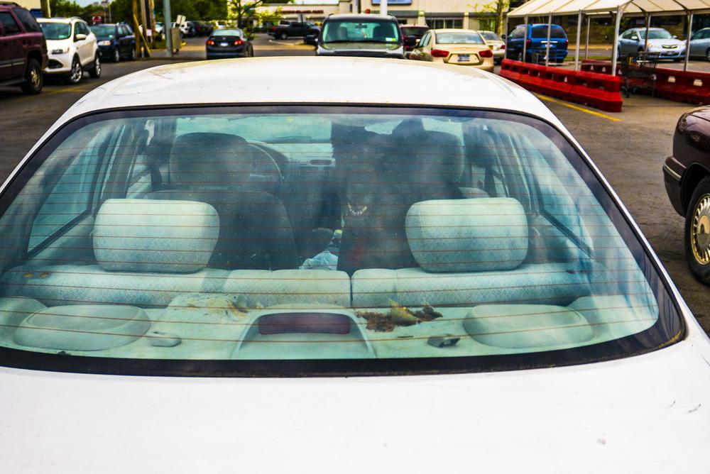 Car Dog.JPG