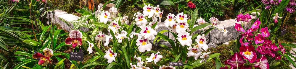 2017-gardens-orchids_450high.jpg