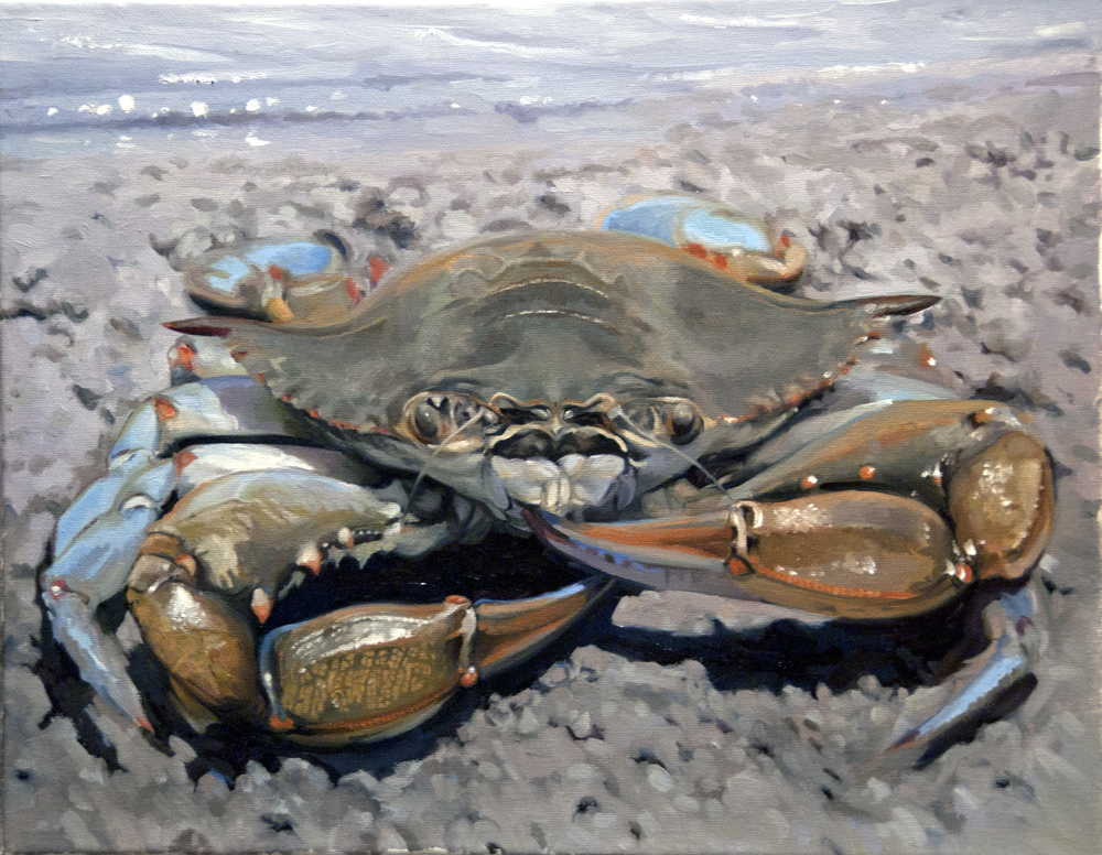 "Blue Tipped Crab  oil on canvas  14"" x 18""   available"