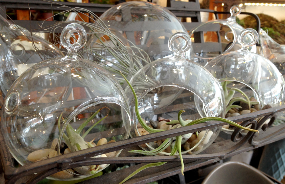 Airplants in suspend-able glass vessels. I might have to pick up a few for my home! Where is my stamp card...?