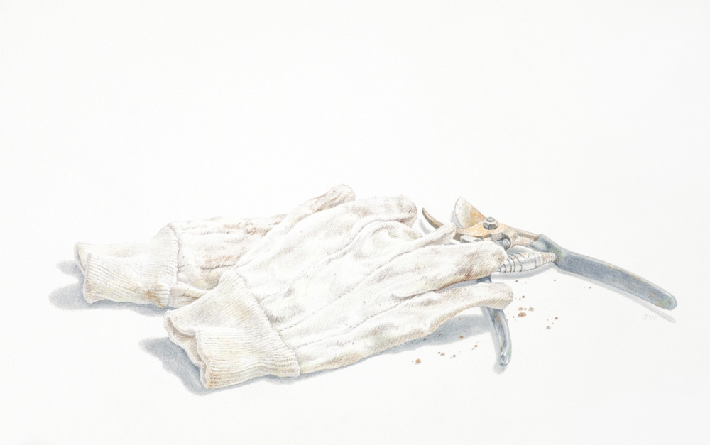 Jane Wolsak, Gardening Gloves, Pencil Crayon on Paper