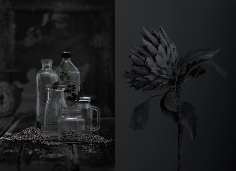 Coriander_Dry Flower.jpg