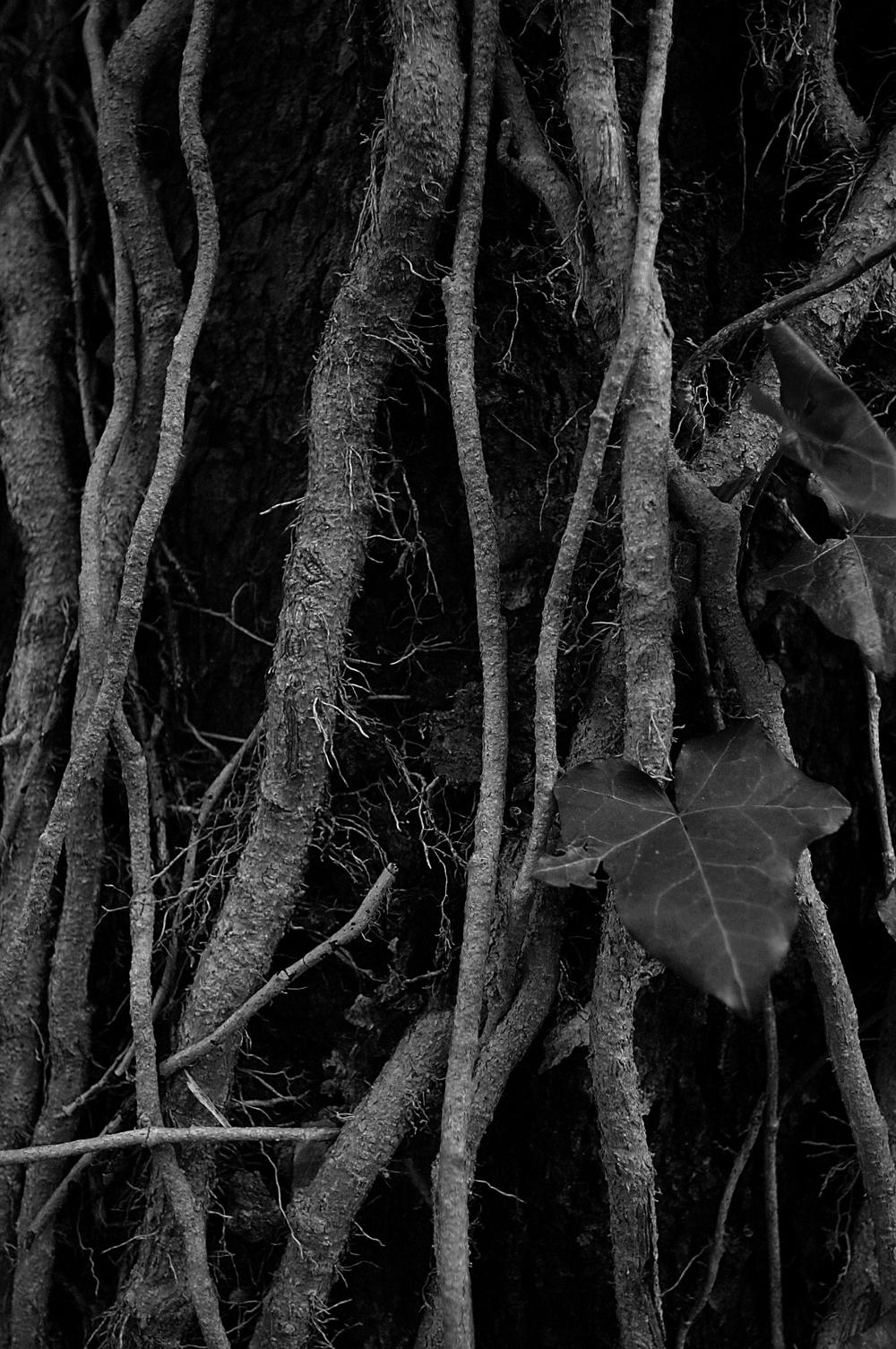 Roots_2.jpg