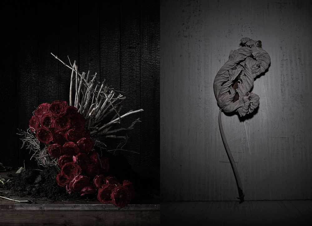 Uprooted Roses_Dry Stem.jpg