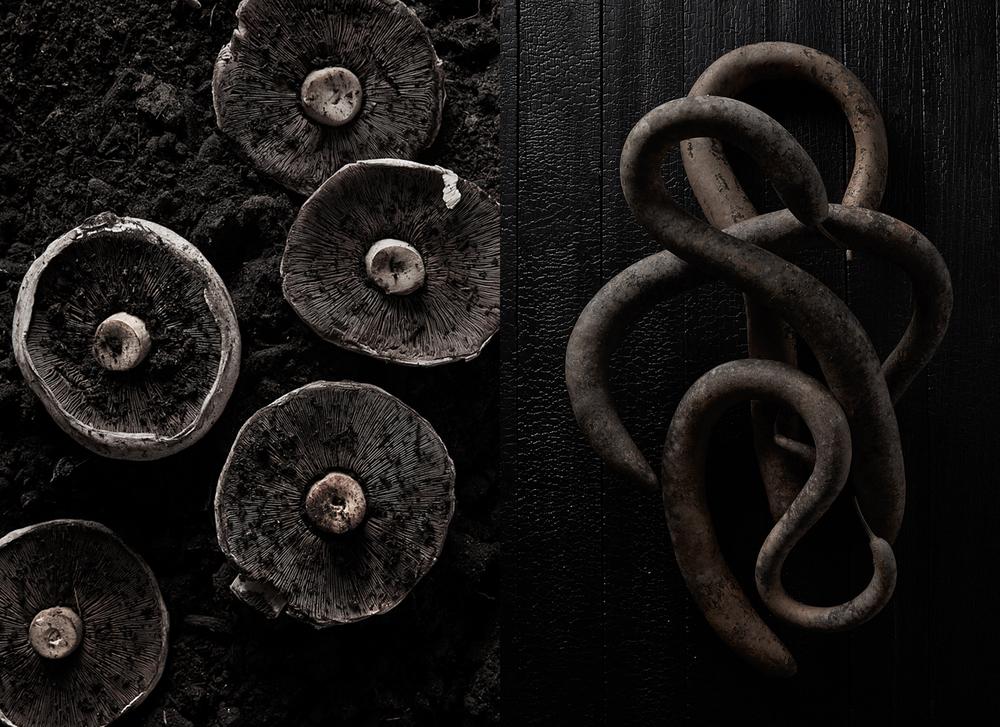 Mushroom_Snake Squash_Uprooted.jpg