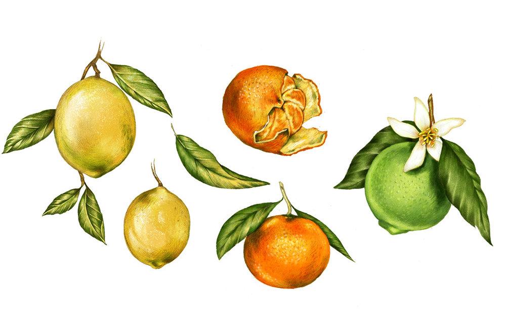 LU_citrus.jpg