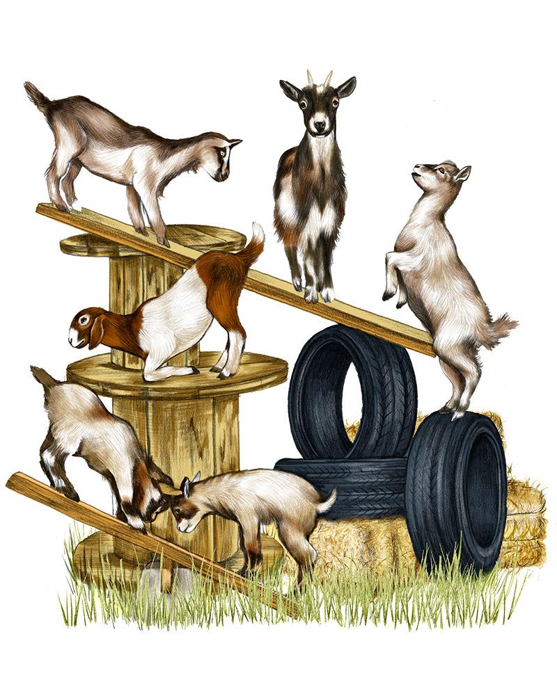 CH3_Goat_GoatPlayground.jpg