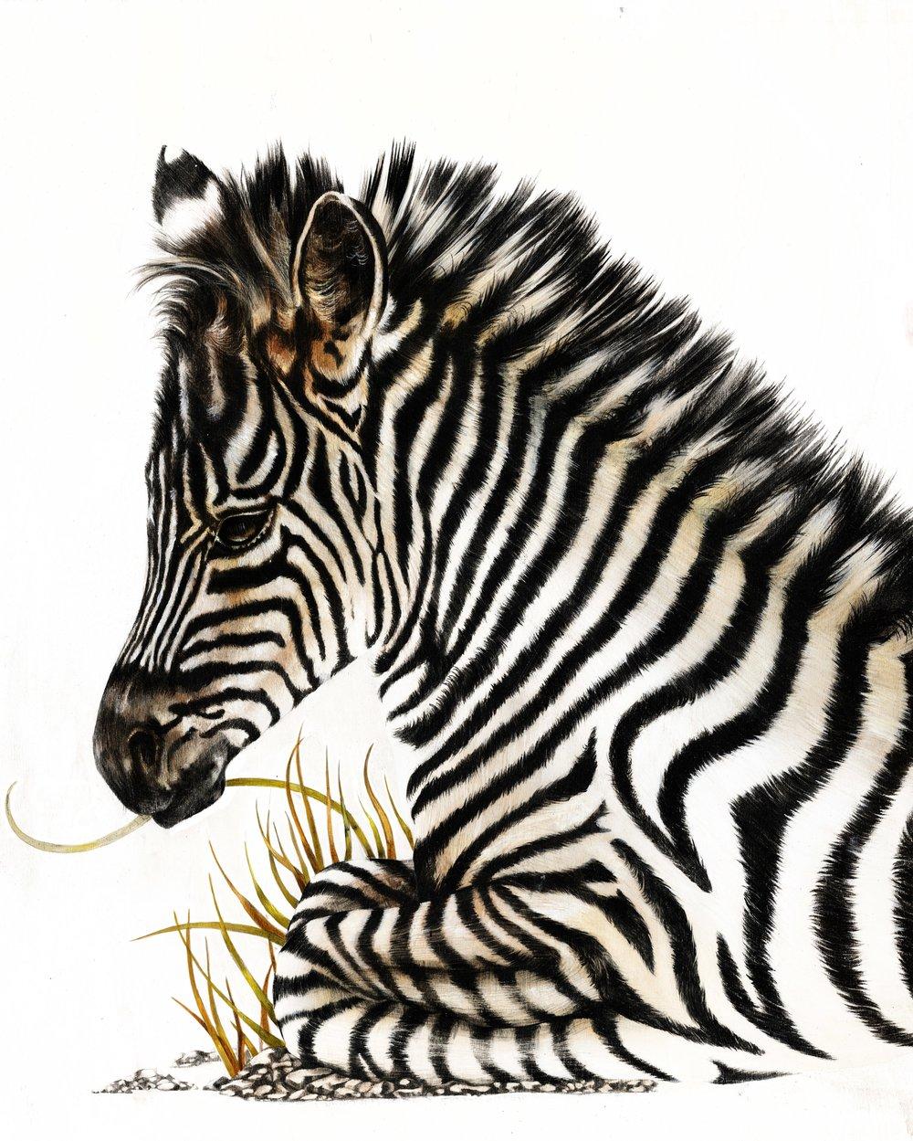 baby_zebra-2.jpg