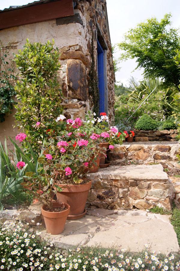 pot-plants-in-the-garden-morganics-farm.jpg