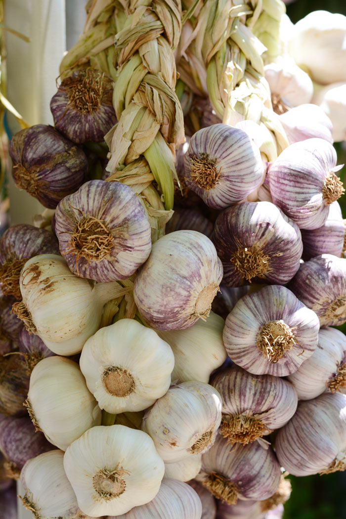 braids-of-white-and-purple-organic-garlic-morganics-farm.jpg